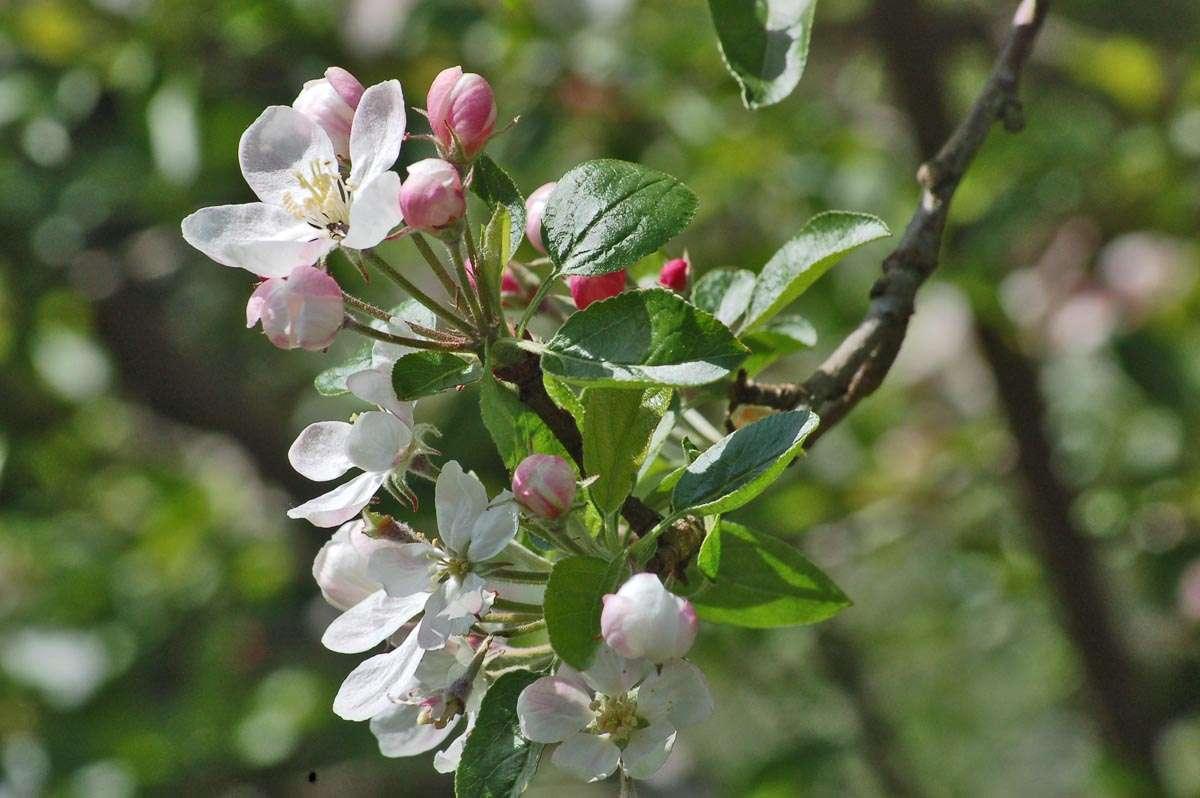 More tree blossom